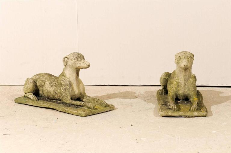 A handsome pair of greyhound statues. This Italian pair of cast stone greyhound sculptures feature the dogs in a sphinx position resting on their base but alert. Nice aging and patina on both as well. They are more of a grey color with darker spots