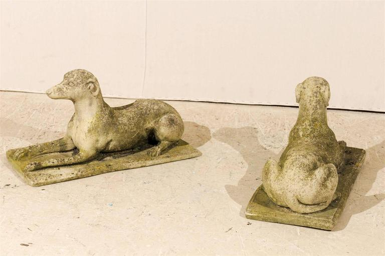 A Pair of Italian Cast Stone Medium Sized Greyhound Statues For Sale 3