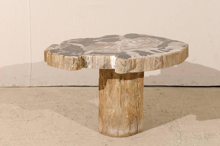 Natural Petrified Wood Coffee, Drink Or Side Table In