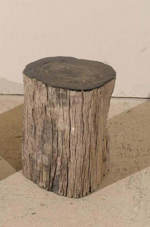 Pair of Black Petrified Wood Fossil Drink or Side Tables, Natural, Polished Wood 6