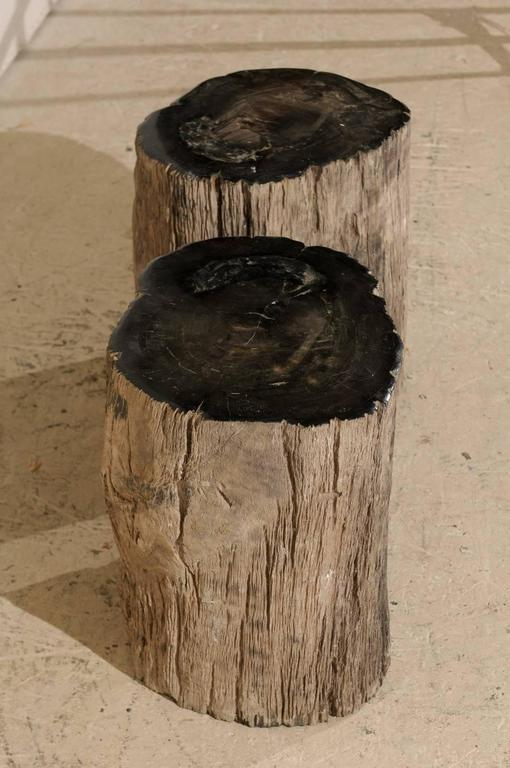 Pair of Black Petrified Wood Fossil Drink or Side Tables, Natural, Polished Wood 7