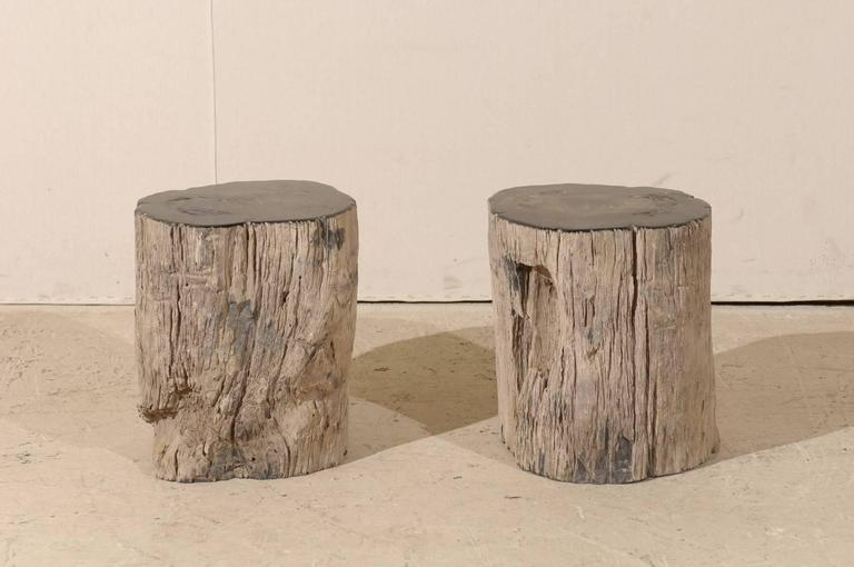 Pair of Black Petrified Wood Fossil Drink or Side Tables, Natural, Polished Wood 4