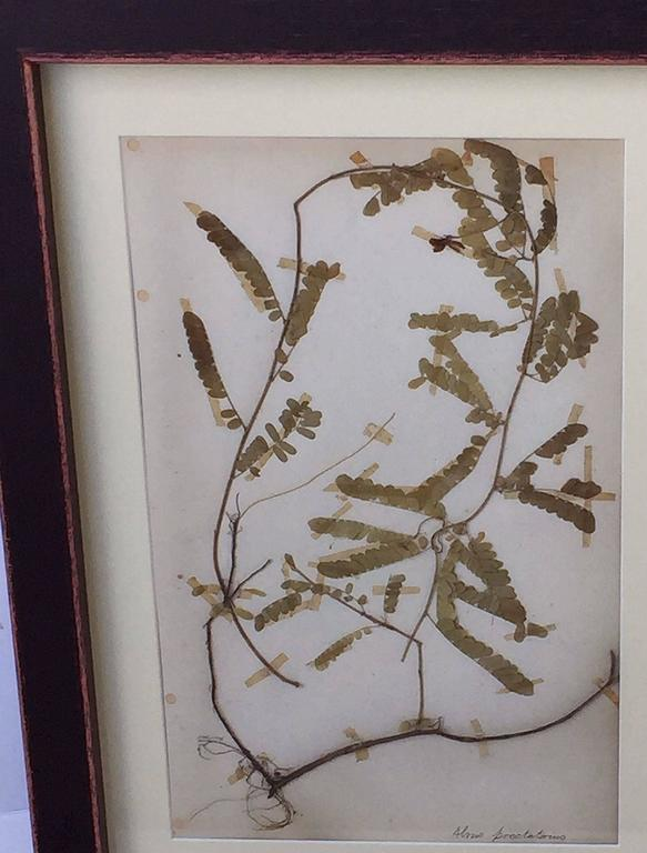Swedish Herbal Pressed Botanical Framed under Glass, circa 1940 2