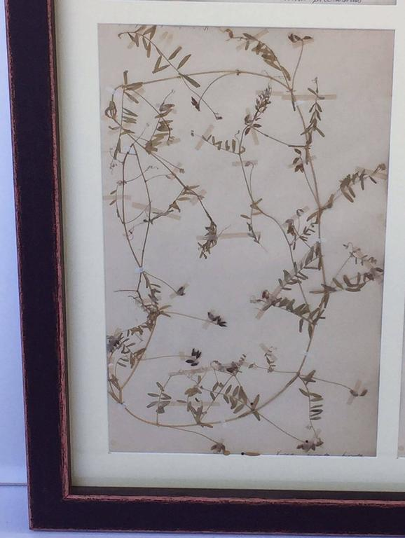 Swedish Herbal Pressed Botanical Framed under Glass, circa 1940 5