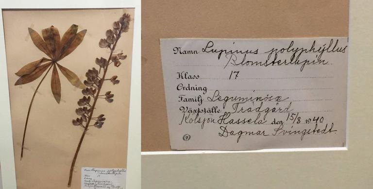Swedish Herbal Pressed Botanical Framed under Glass, circa 1940 7
