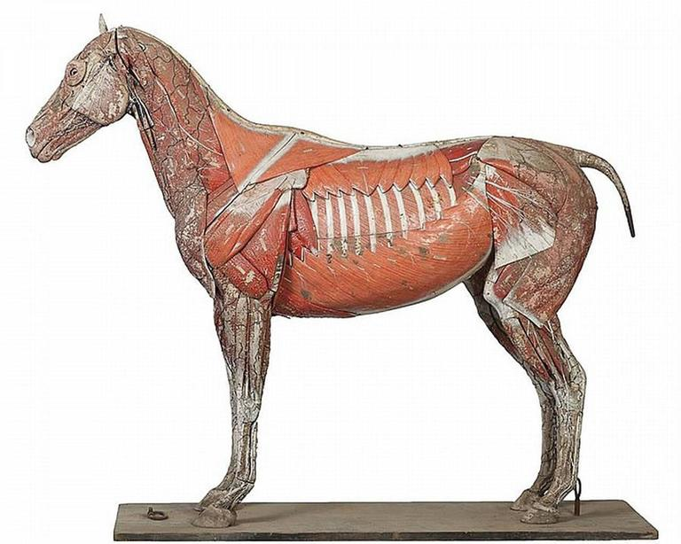 This is one of the largest and rarest of the Dr. Auzoux papier mâché anatomical models. It's also one of our most ambitious offerings. This prized 1846 first generation handmade model dates to the mid-1800s. I am told that there are almost 200