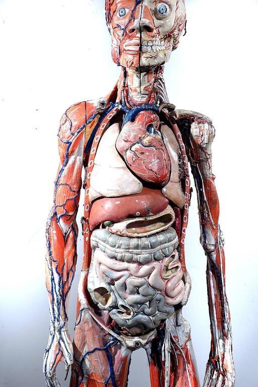 Rare 1800s Dr. Auzoux Anatomical Model 2