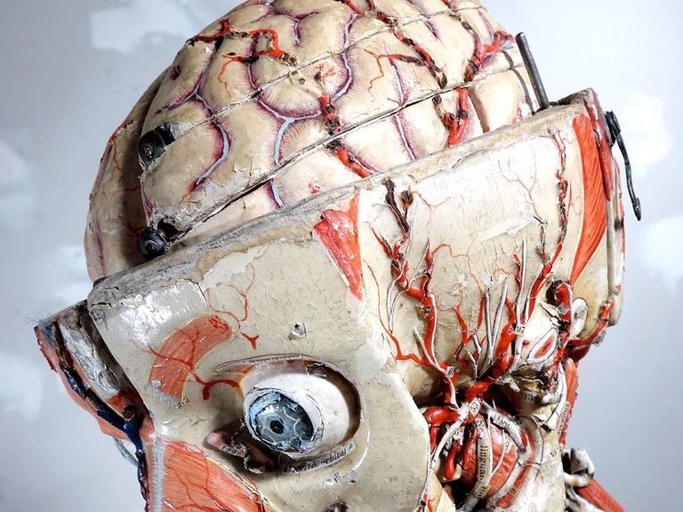 Rare 1800s Dr. Auzoux Anatomical Model 3