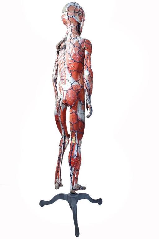 Rare 1800s Dr. Auzoux Anatomical Model 4