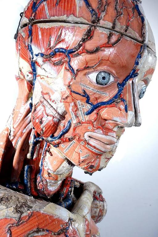 Rare 1800s Dr. Auzoux Anatomical Model 5