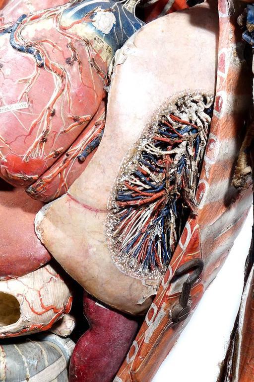 Rare 1800s Dr. Auzoux Anatomical Model 6