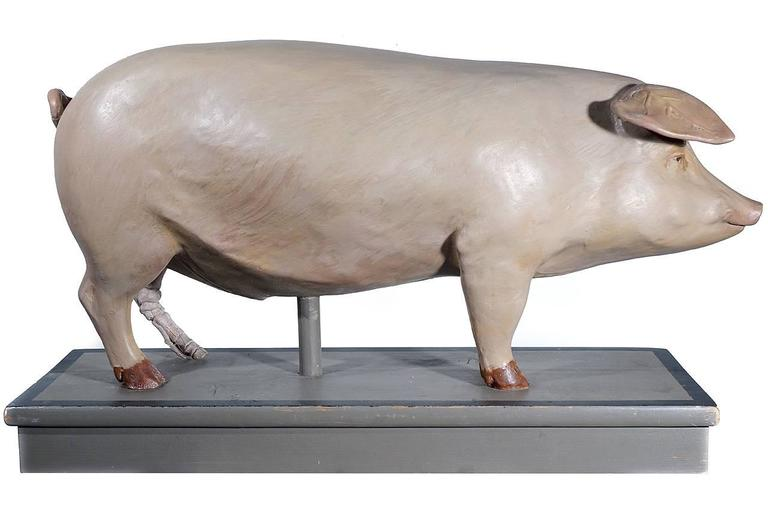 Early Anatomical Model of a Pig 2