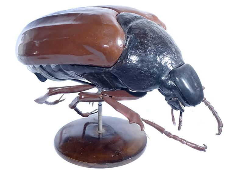 Large Early Anatomical Model of a Flying Beetle 5