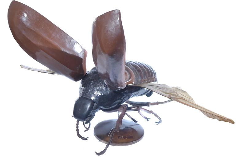 Large Early Anatomical Model of a Flying Beetle 6