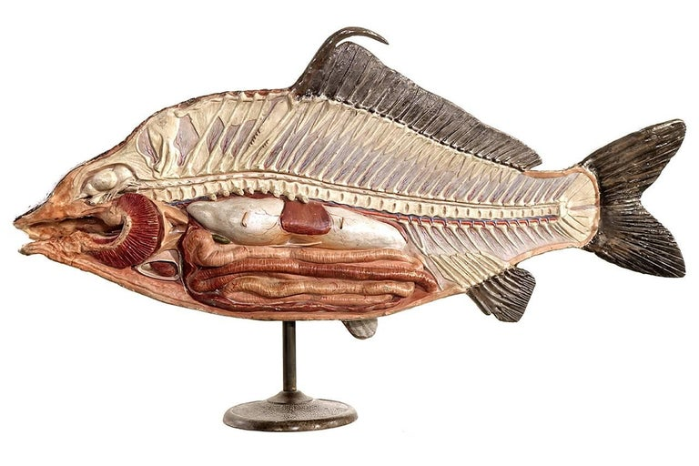 Large Early Paper Mache Didactic Model of Fish 2