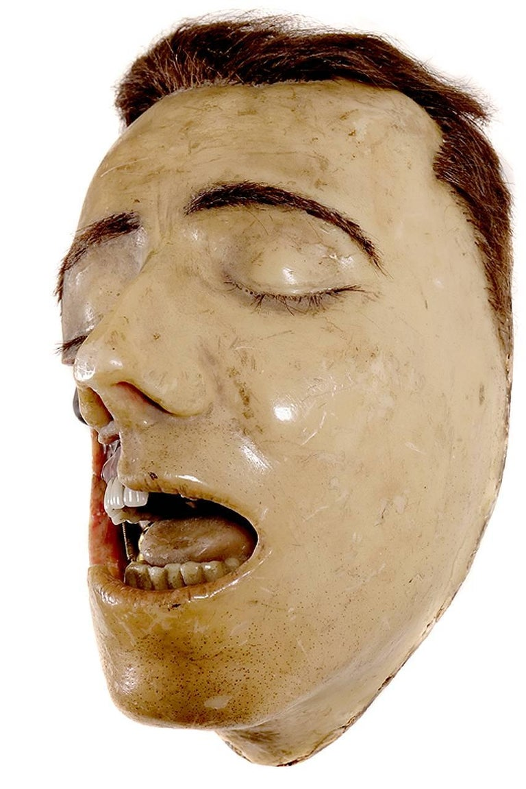 Industrial Highly Detailed Early 1800s Wax Dental Model For Sale