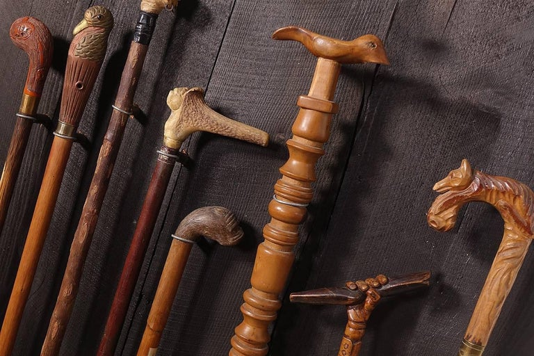 Collection of Walking Sticks in Shadow Box 4