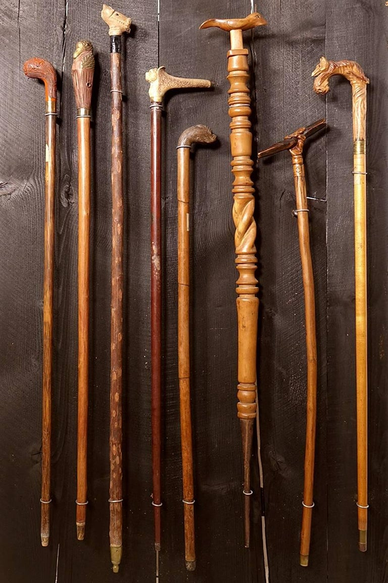 Collection of Walking Sticks in Shadow Box 5