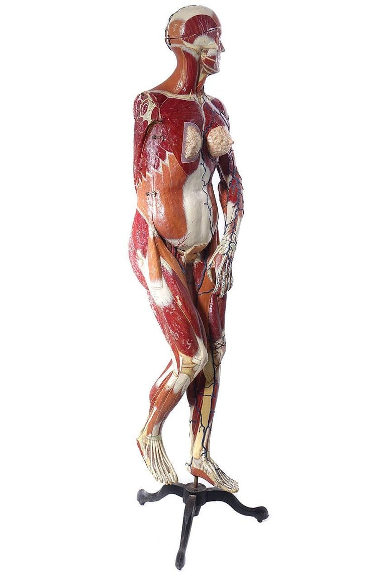 Full Size Dr. Auzoux Female Anatomical Model 2