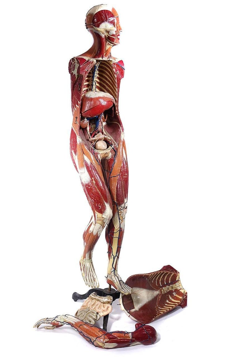 Full Size Dr. Auzoux Female Anatomical Model 4