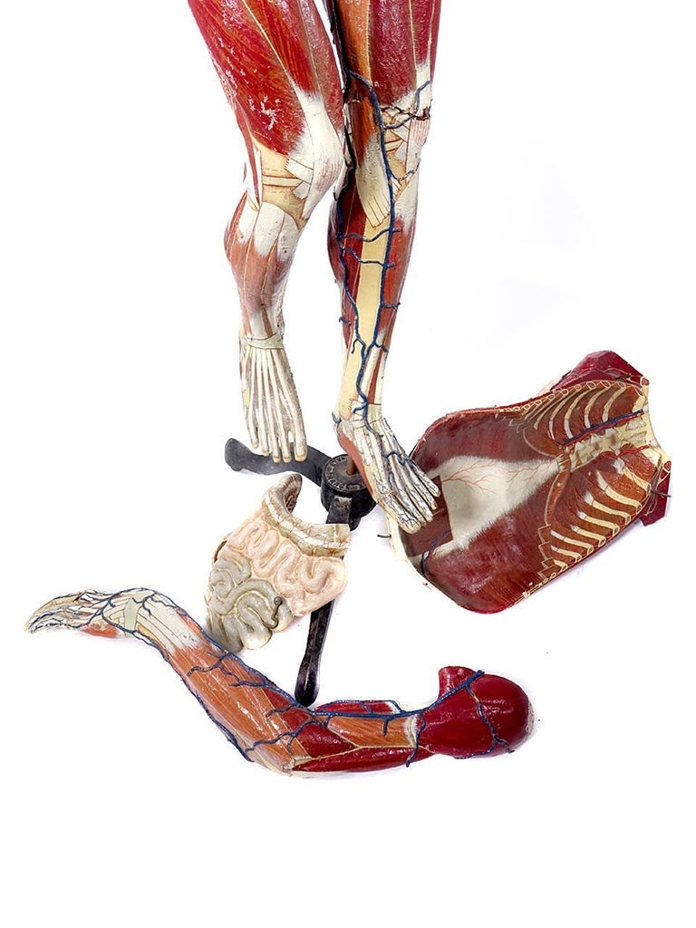 Full Size Dr. Auzoux Female Anatomical Model 6