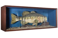 Hand Carver Folk Art Fish in Glass Display Case