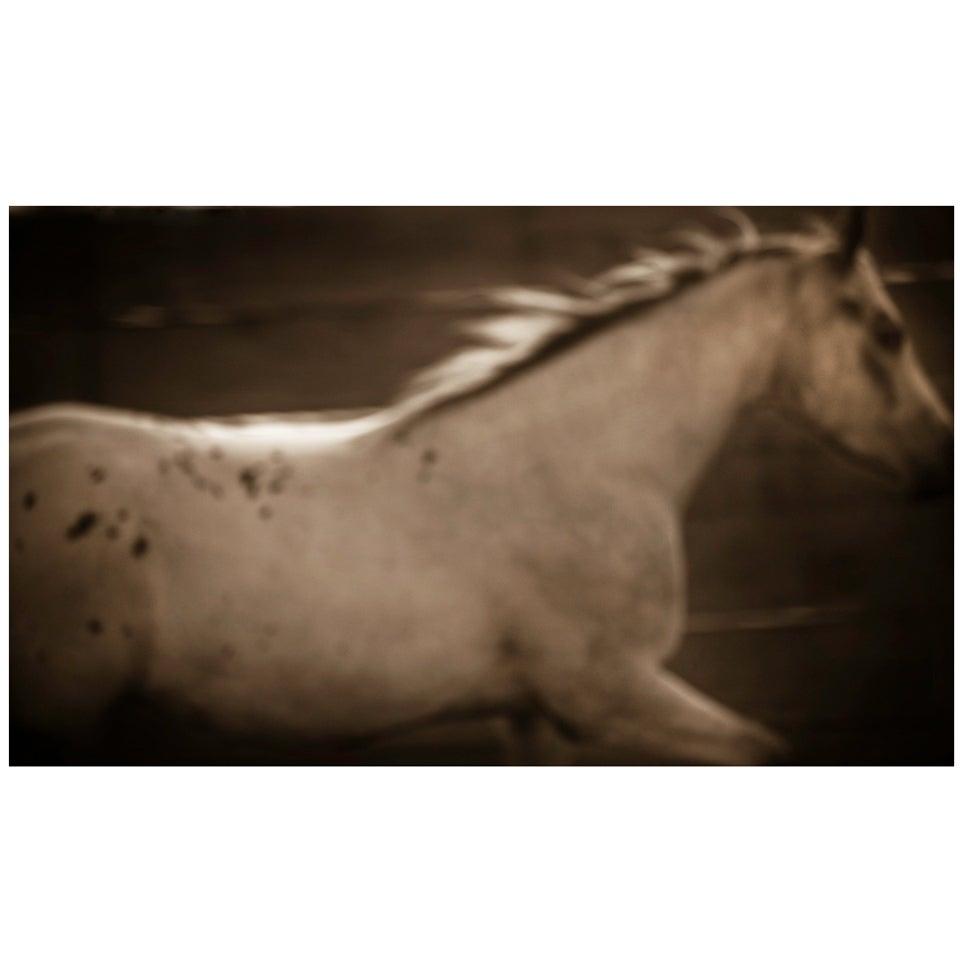 "21st Century Giclee Print Photograph ""Appaloosa"" by Janet Mesic Mackie"