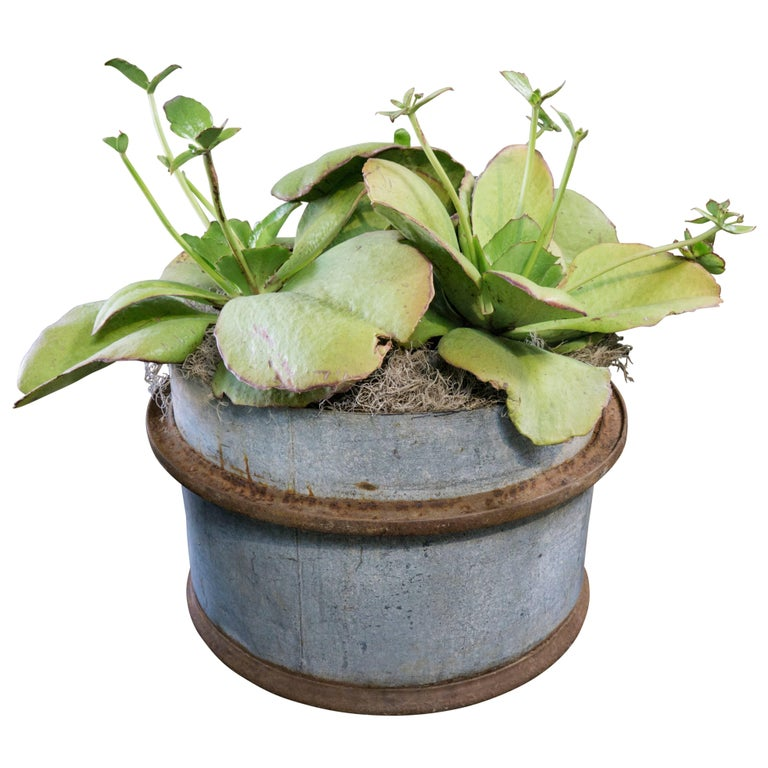 A fitting choice for housing your favorite plants or flowers, vintage French iron tubs have a natural rust color patina that compliments landscapes. These round containers made circa 1960 feature a chic center ring adding character and depth
