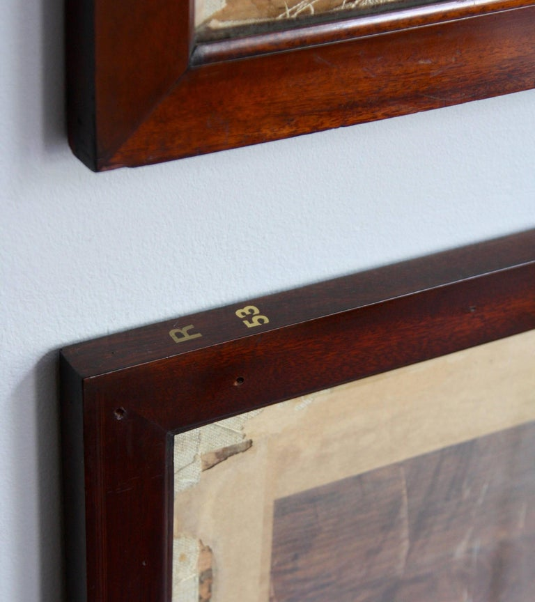 English Antique Mahogany Frames/ Specimen Trays/ Museum Display Cases from the V&A For Sale