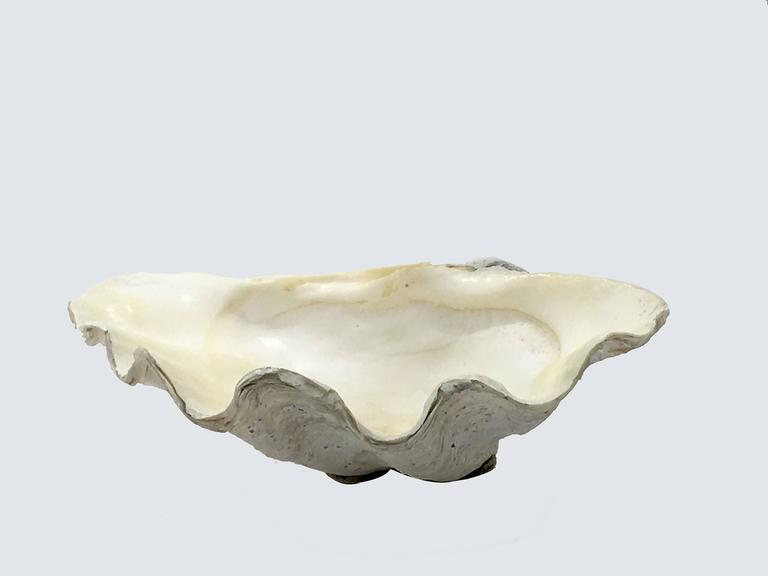 Colonial Revival Beautiful Natural Patina, Clam Shell, Vide Poche, Bowl For Sale