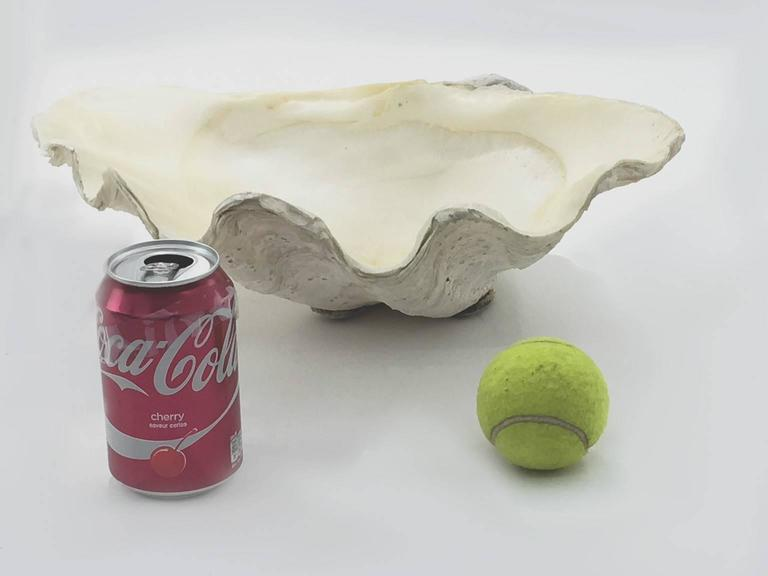 Beautiful Natural Patina, Clam Shell, Vide Poche, Bowl In Good Condition For Sale In Auribeau sur Siagne, FR