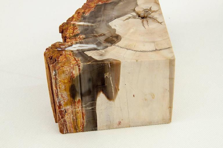 Exceptional pair of petrified wood bookends.