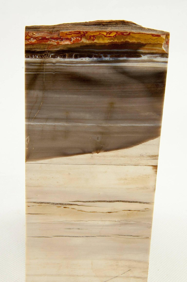 Exceptional Pair of Petrified Wood Bookends 4