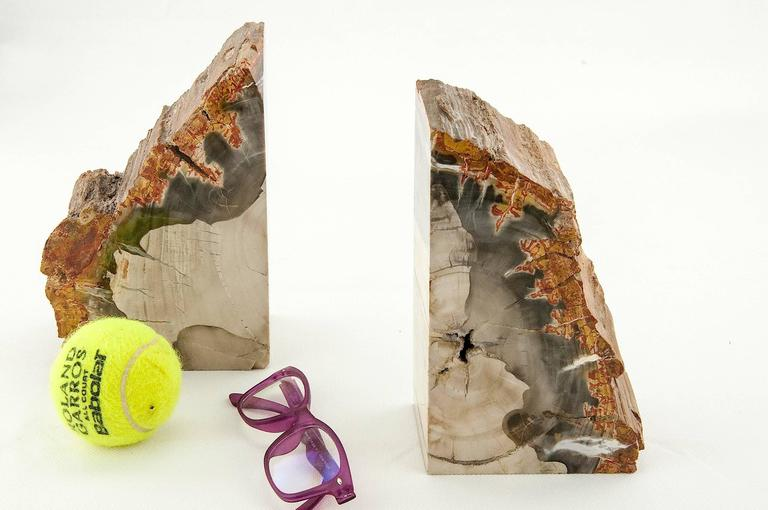 Exceptional Pair of Petrified Wood Bookends In Excellent Condition For Sale In Auribeau sur Siagne, FR