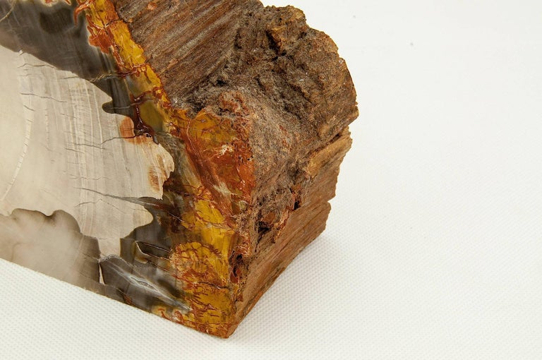 Exceptional Pair of Petrified Wood Bookends 6
