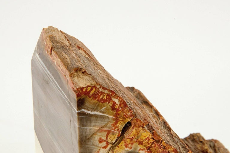 Exceptional Pair of Petrified Wood Bookends 7