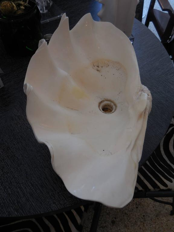 Large Natural Sink Clam Shell At 1stdibs