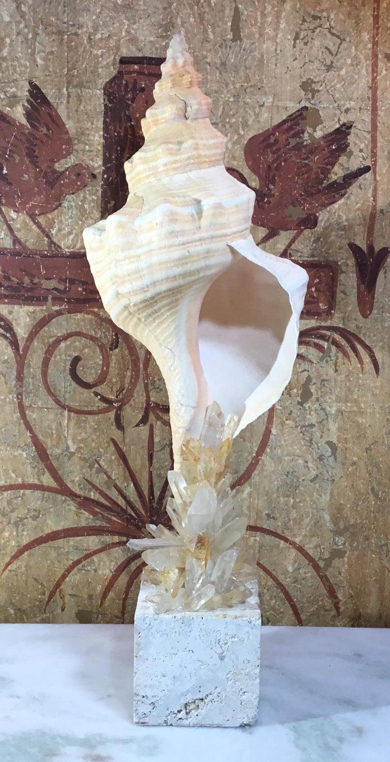 Atlantic Sea Shell and Crystal Quartz For Sale 1