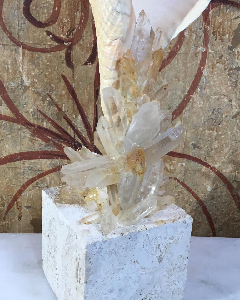 Atlantic Sea Shell and Crystal Quartz For Sale 9