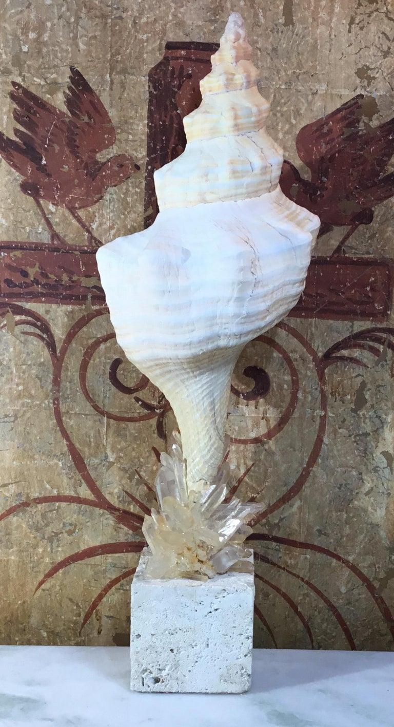 Atlantic Sea Shell and Crystal Quartz For Sale 12