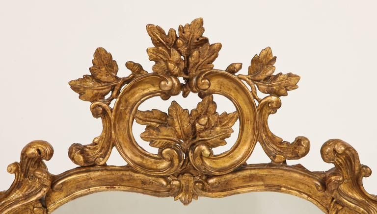 This fine French Louis XV period mirror has oak leaf and acorn decoration amidst C and S curves, epitomizing the Rococo style in gilded wood and mirror glass.