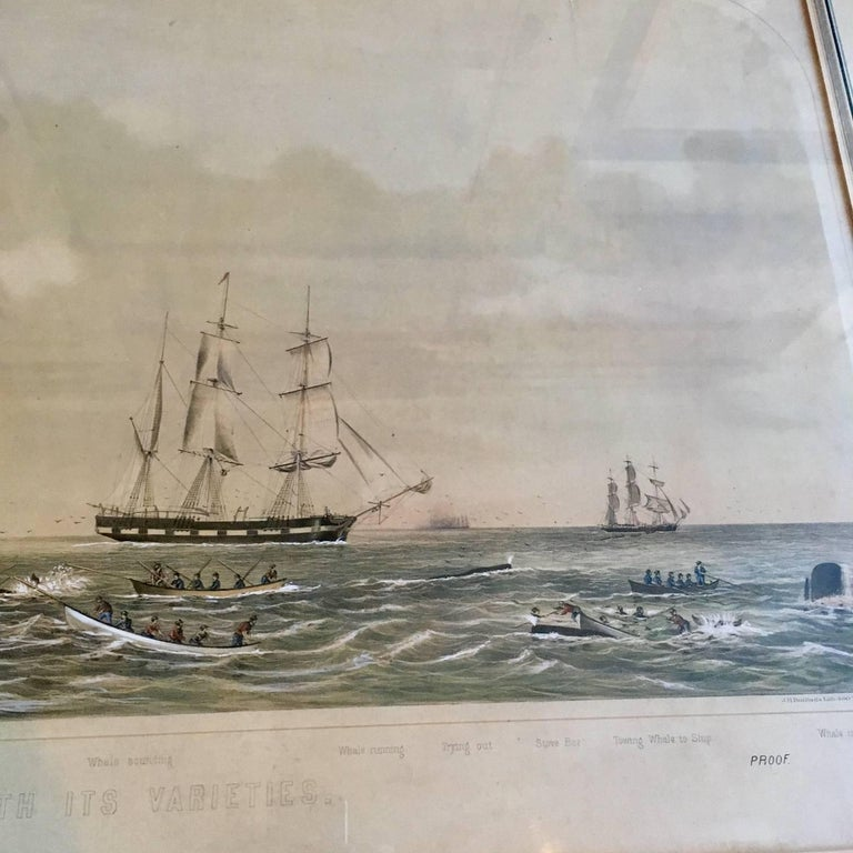 American 19th Century Colored Lithograph of Sperm Whaling with Its Varieties, 1870 For Sale