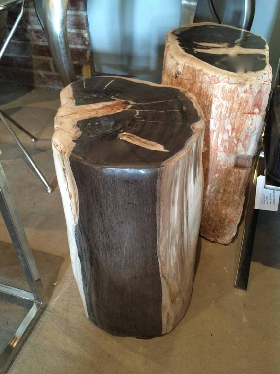 Petrified Wood Side Table or Table Base For Sale 1
