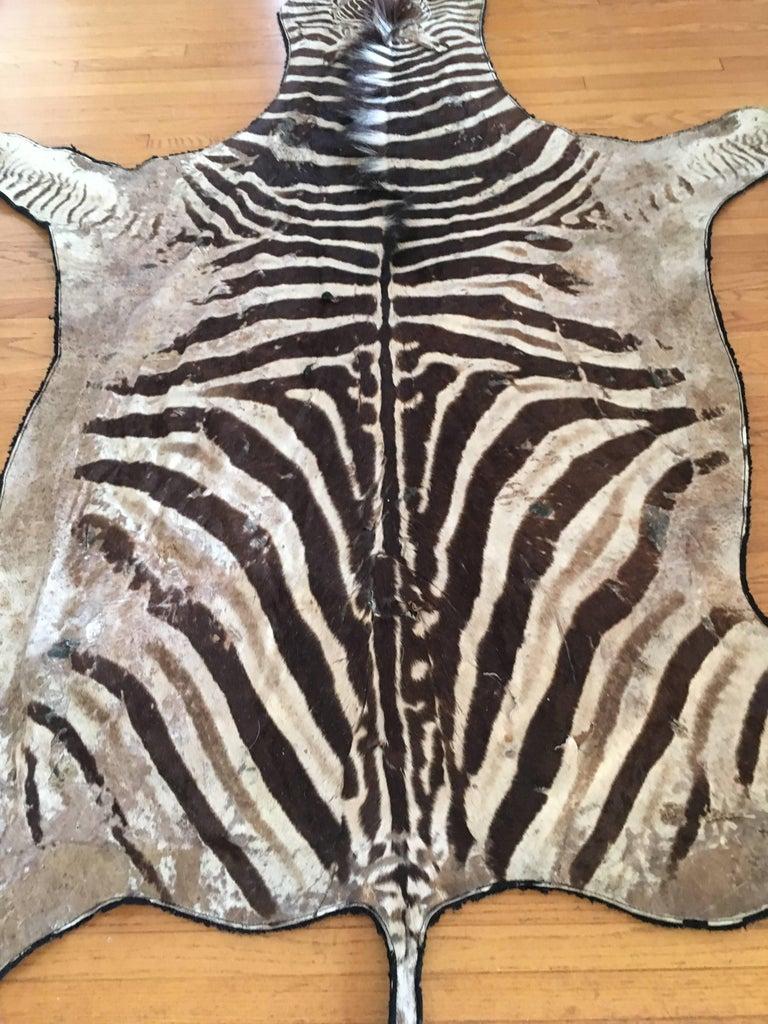 Authentic Vintage Felt Backed Zebra Hide Rug At 1stdibs