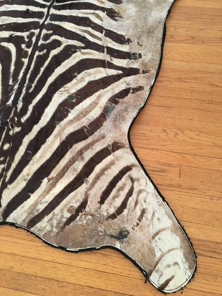 Zambian Authentic Vintage Felt Backed Zebra Hide Rug For Sale