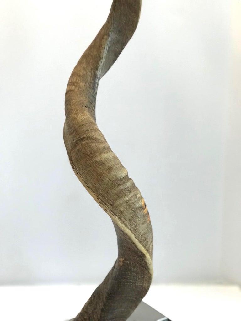 Vintage African Kudu Horn Sculpture on Stand For Sale 1