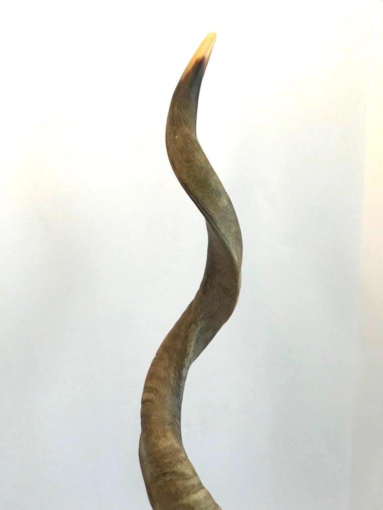 Vintage African Kudu Horn Sculpture on Stand For Sale 2