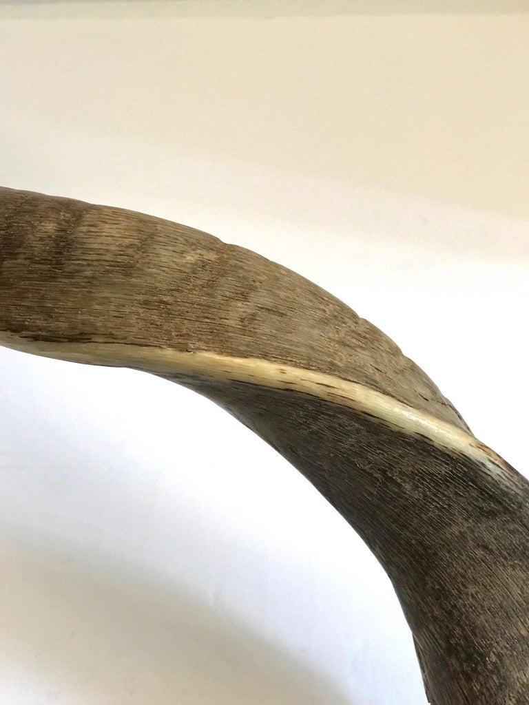 Vintage African Kudu Horn Sculpture on Stand For Sale 5