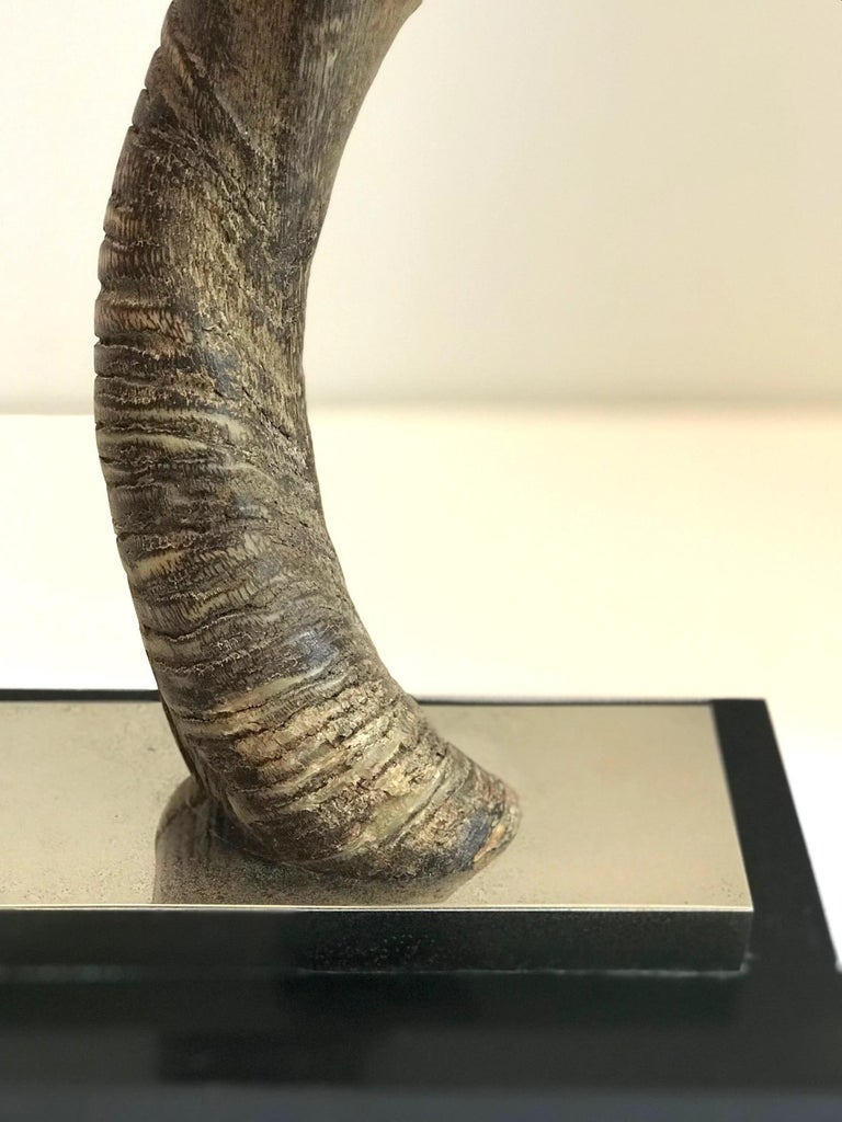 Vintage African Kudu Horn Sculpture on Stand For Sale 7
