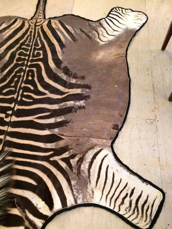 Large Well Marked Burchell Zebra Hide On Felt Rug At 1stdibs
